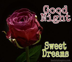 Good night images with rose flowers HD