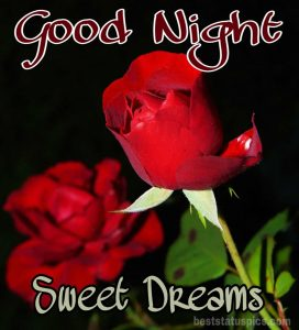 Good night rose flower images HD