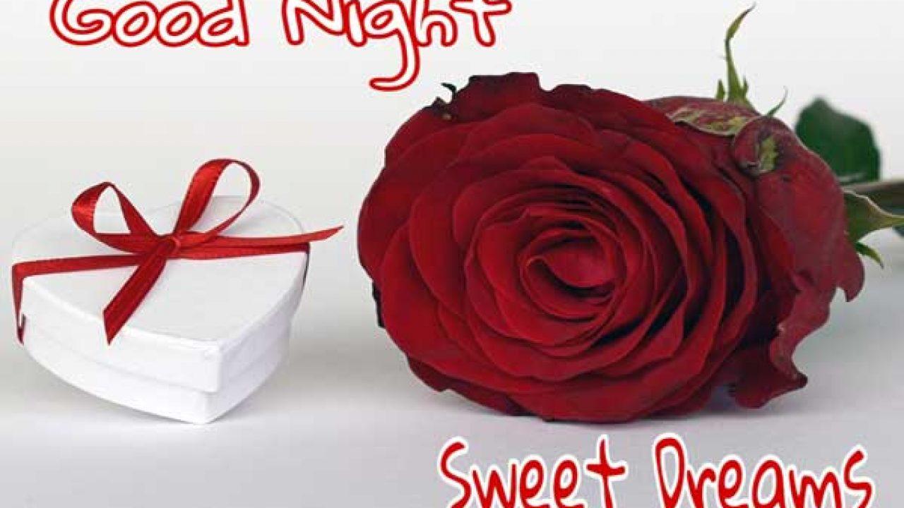 821 Beautiful Good Night Rose Flower Images Hd Best Status Pics