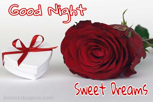 Good night rose images featured