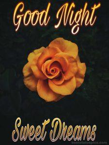 Good night yellow rose photo