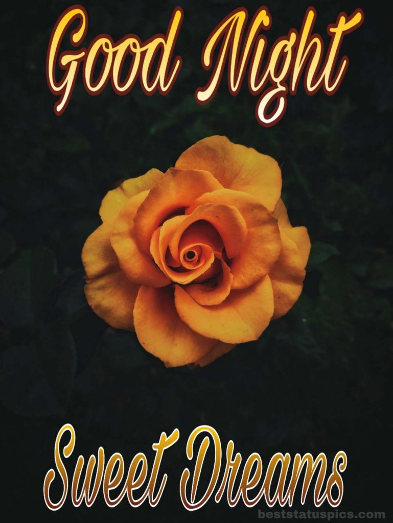 Good night yellow rose photo