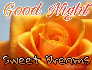 Good night sweet dreams with yellow roses