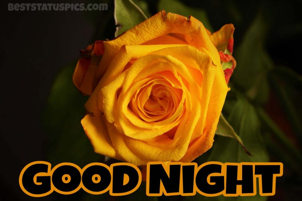 Good night yellow rose for whatsapp dp