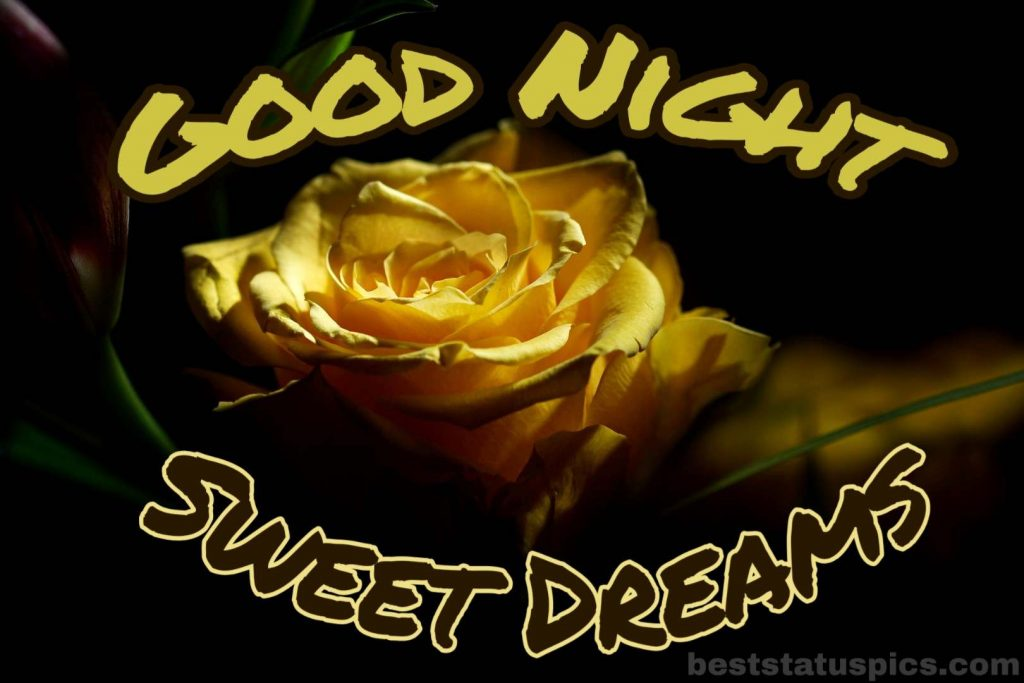 Good night yellow rose love HD
