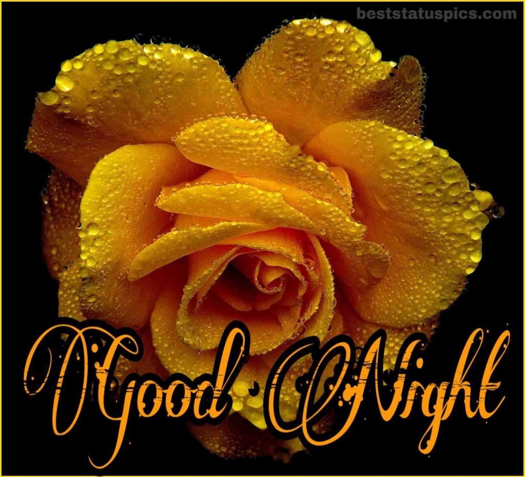Yellow rose good night wallpaper