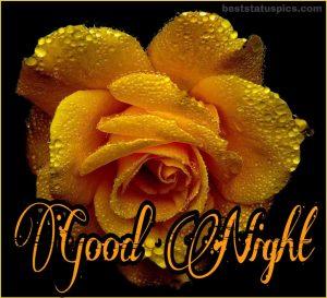 Yellow rose good night wallpaper