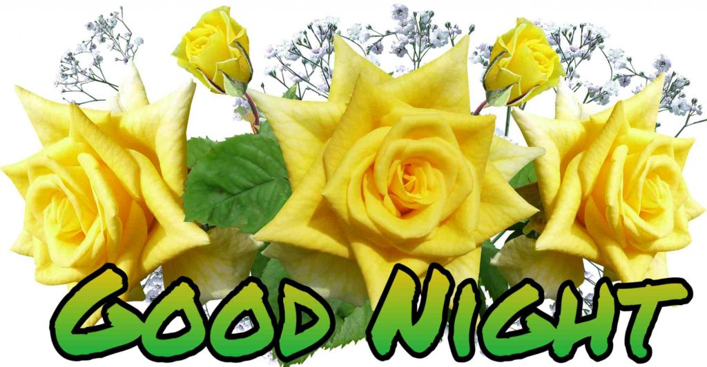 Good night yellow rose pictures
