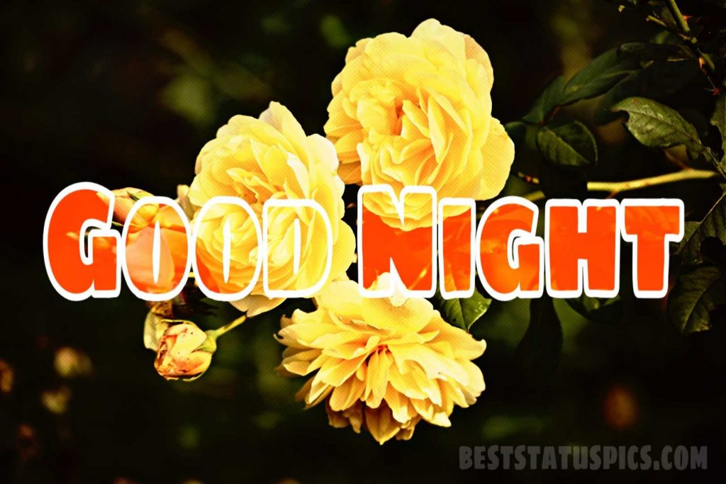 Good night with yellow rose HD images