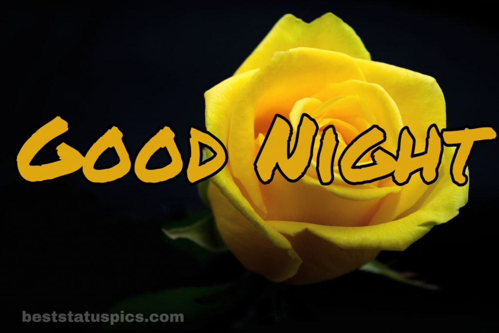 Good night yellow rose friendship images