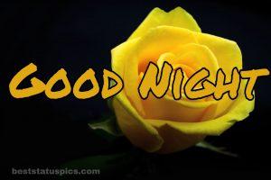 Good night yellow rose friendship images