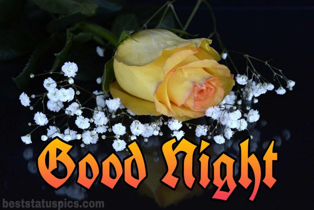 Good night yellow rose HD images