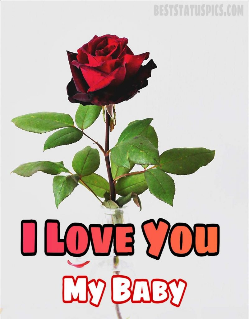 i love you baby dp image with rose