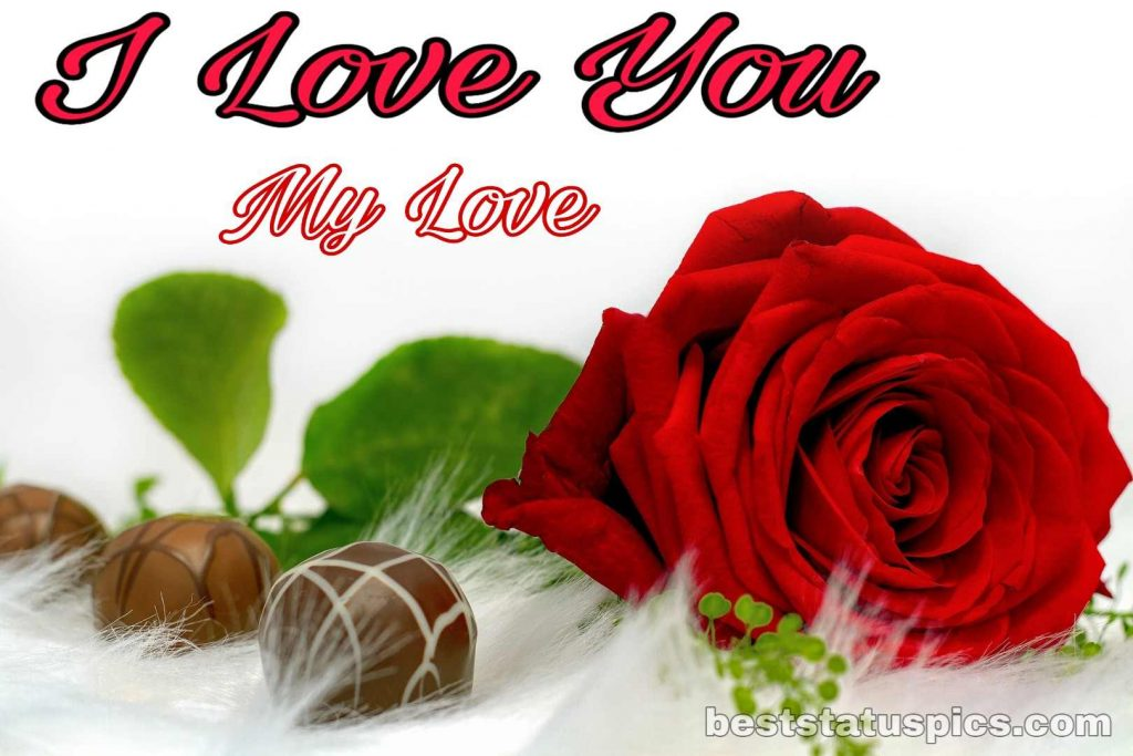 i love you dp photo with rose