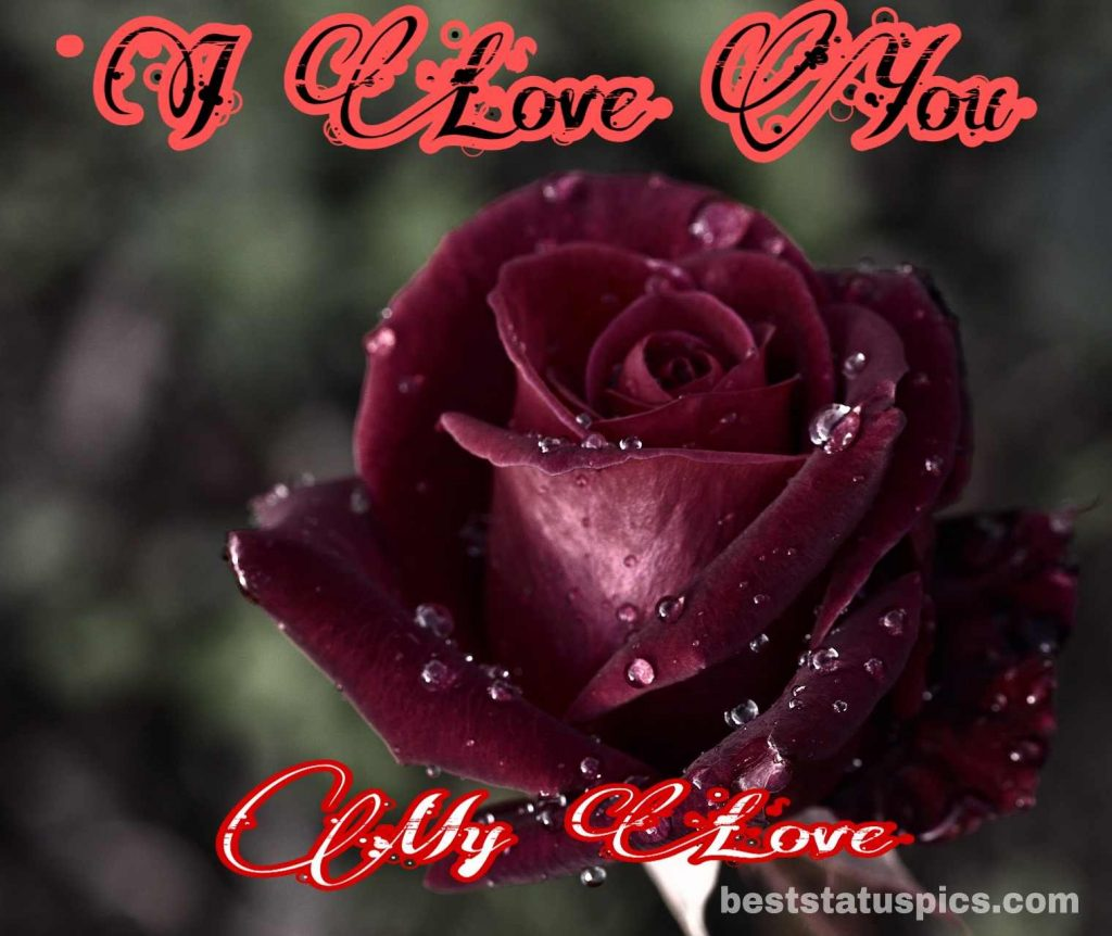 i love you whatsapp dp with rose flower