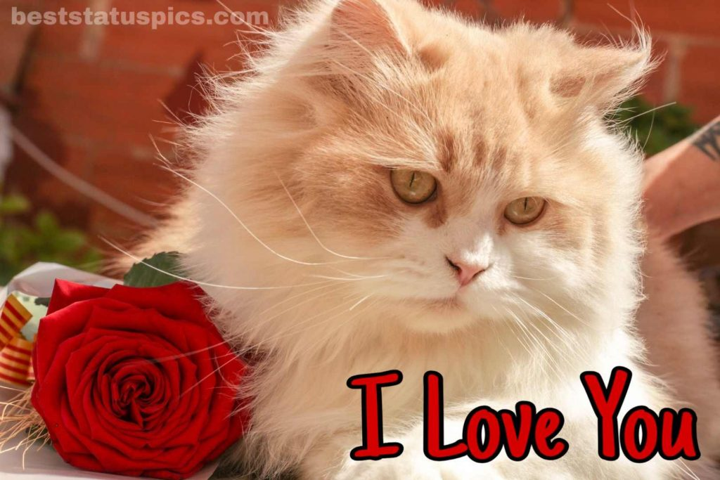 i love you dp download with rose and cat