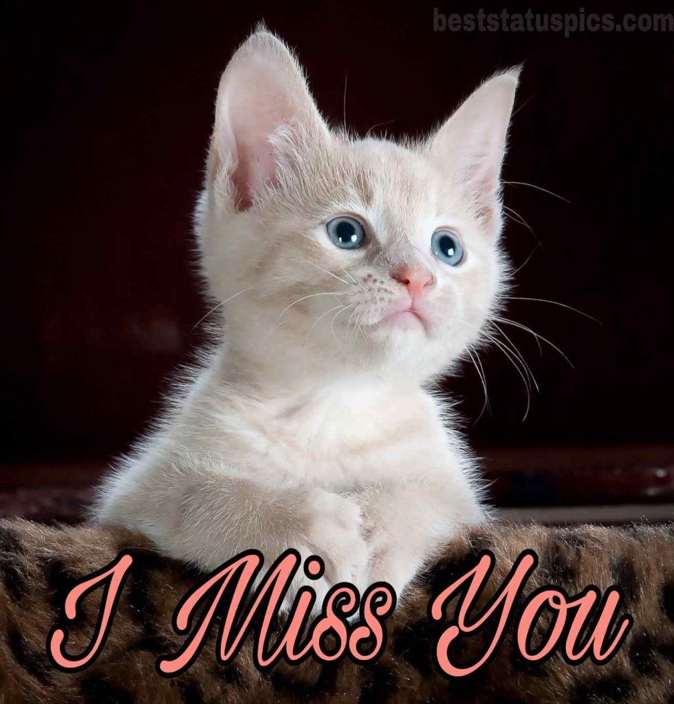I miss you whatsapp dp with cat