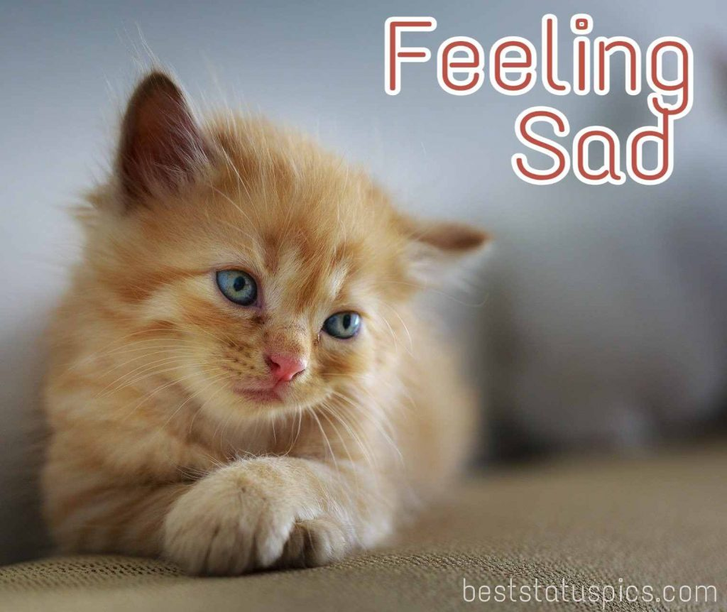 feeling sad dp images quotes with cute kitten