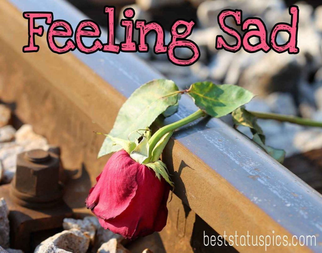 feeling sad images quotes with red rose free download