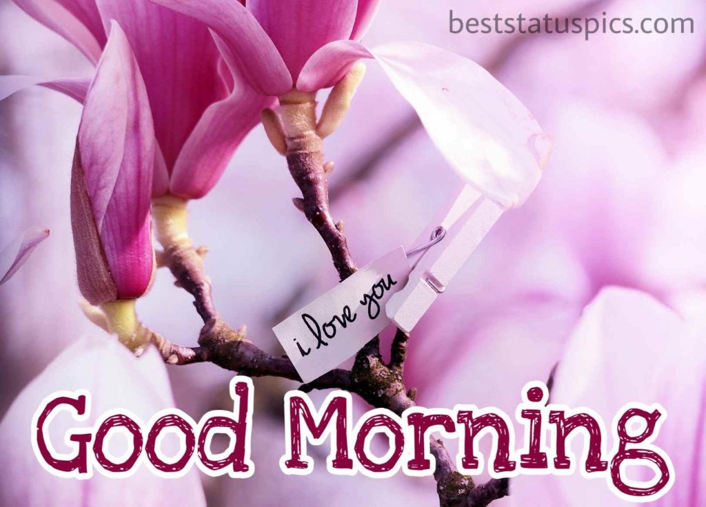 i love you good morning flowers HD image for girlfriend