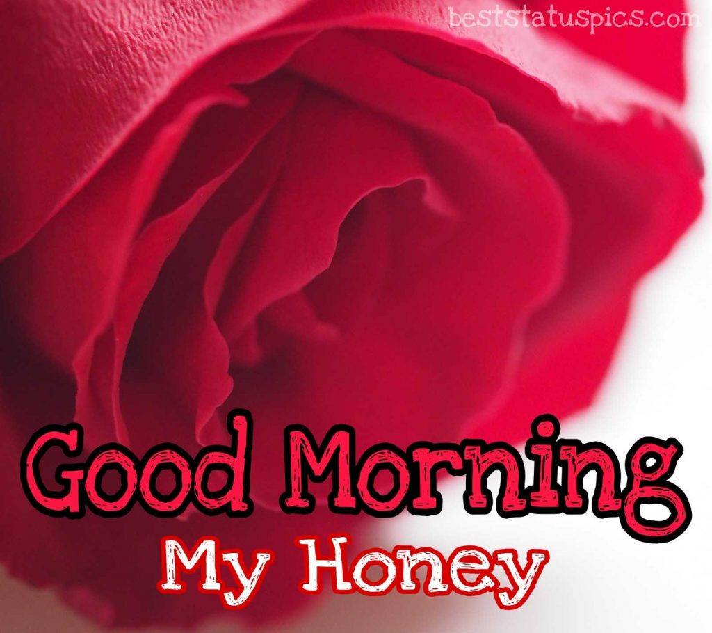 good morning my honey with rose hd image for sweetheart