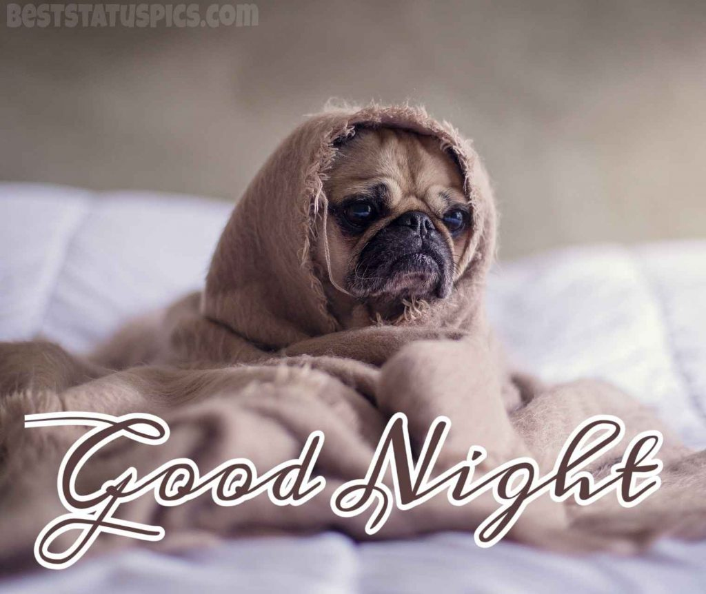 good night with bed and puppy dog pic
