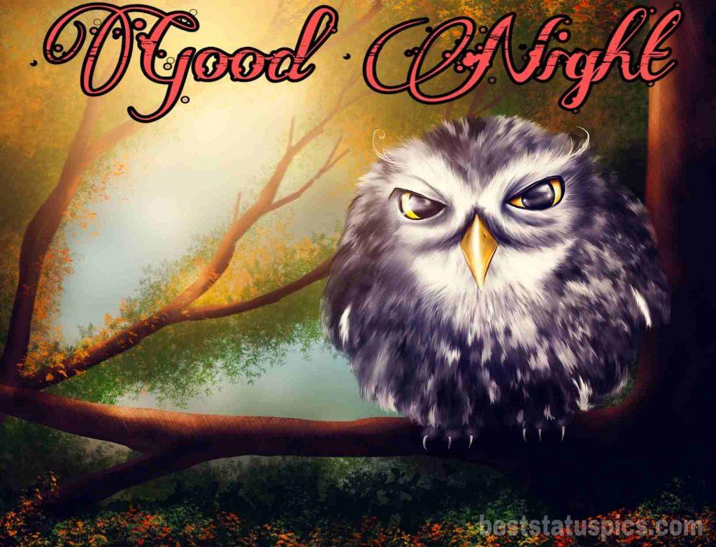 good night beautiful cartoon owl image