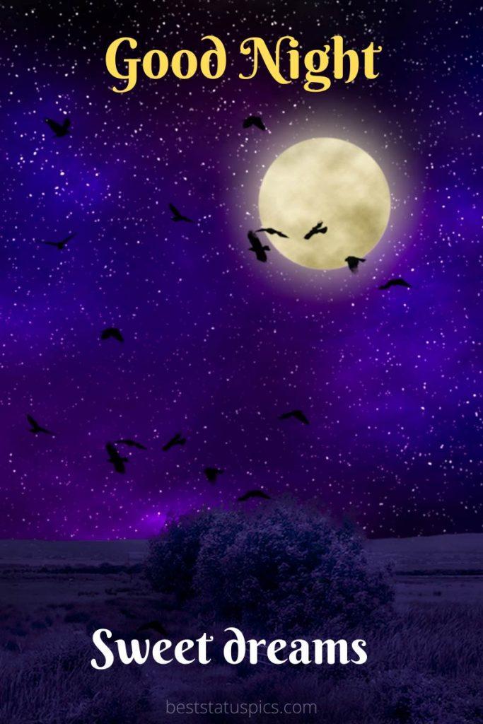 Good night cartoon with birds and moon