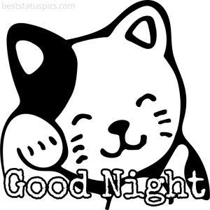 good night cute cat cartoon pic