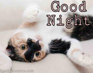 good night grumpy cat image