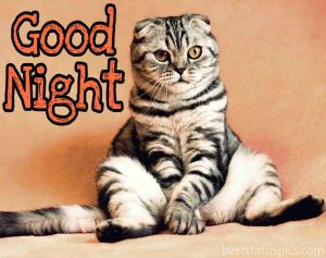 Good night pic with fat cat