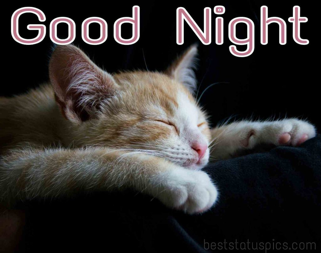 good night kitty pictures