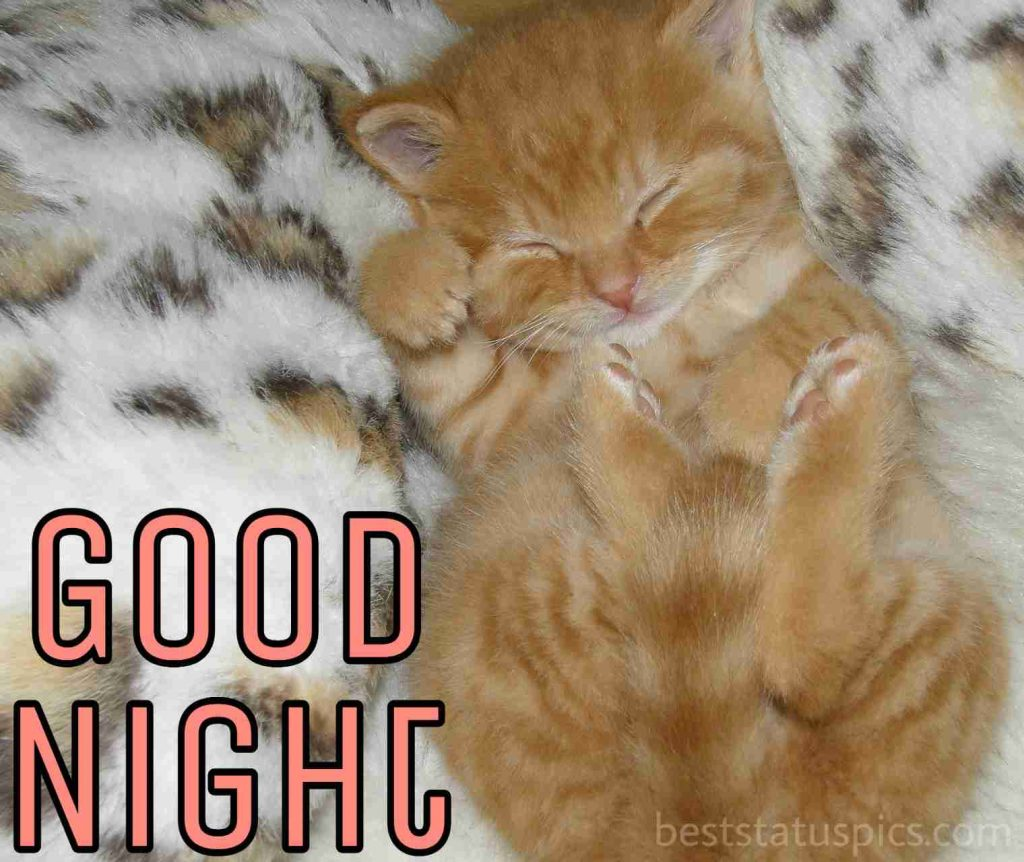 good night cute kitten pic