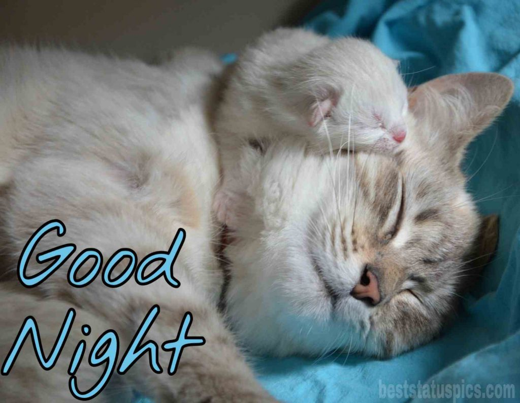 good night fat cat image HD