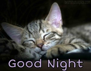 good night kitty images