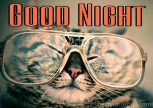good night cat photo