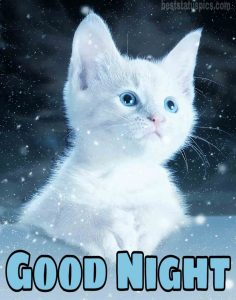 Cute good night with blue eye cat pic