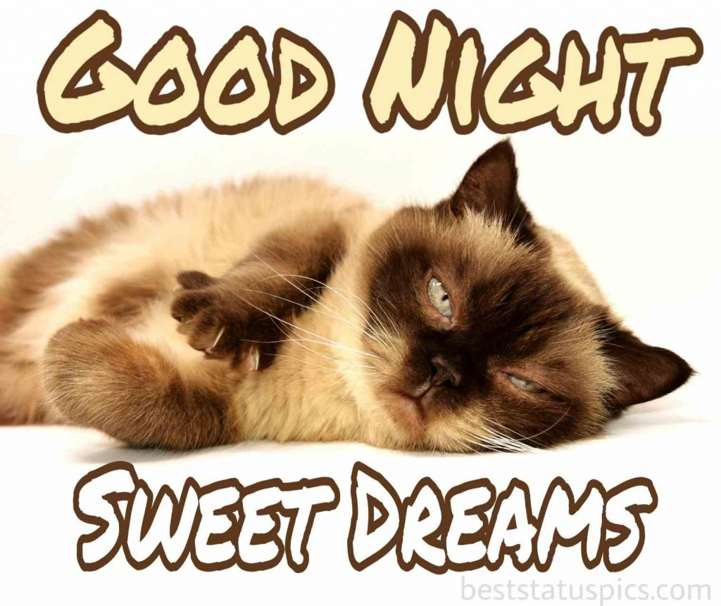 good night cute cat image