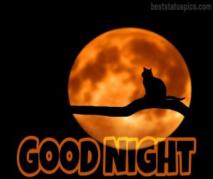 good night cat with moon pic hd