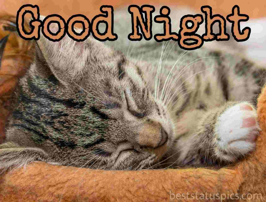good night with cat image