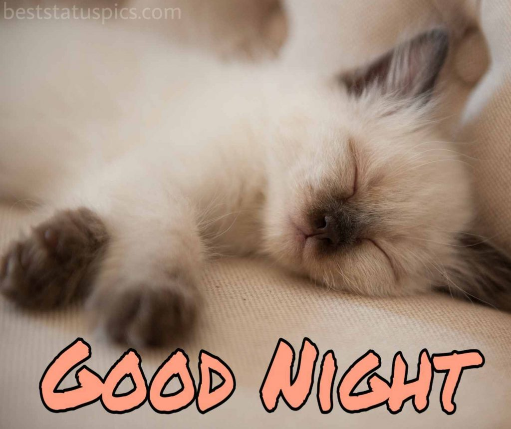 good night cat image hd
