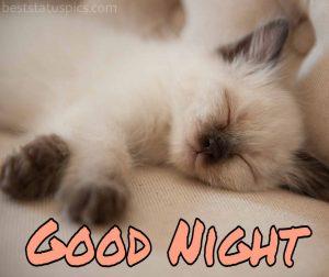 good night cat image hd