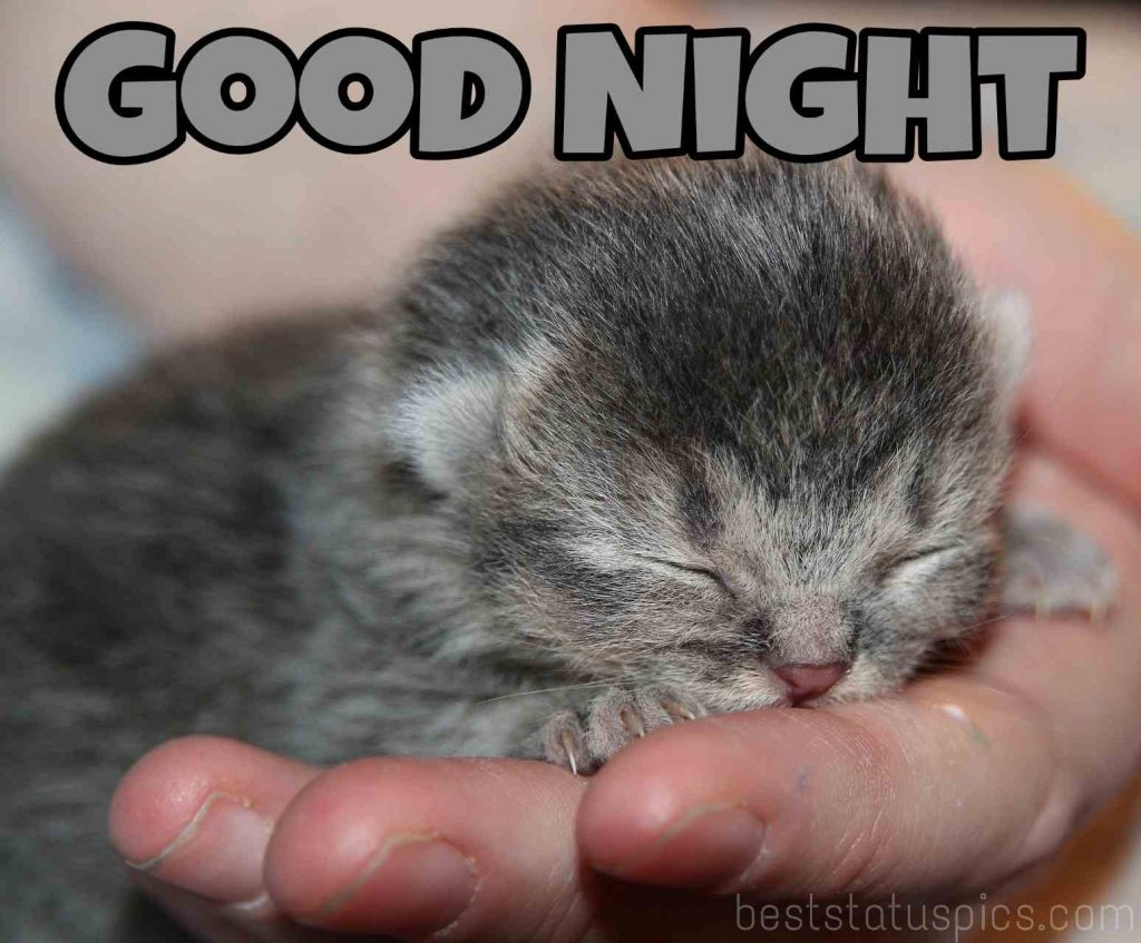 Cute kitty good night pic
