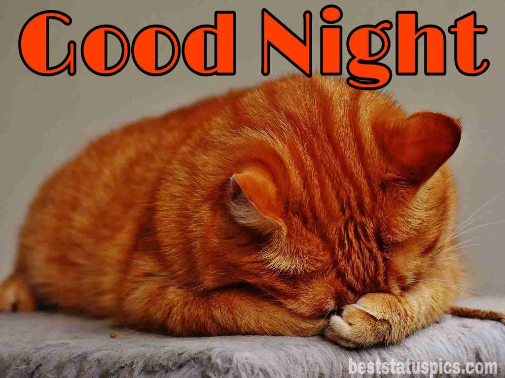 good night cat picture HD