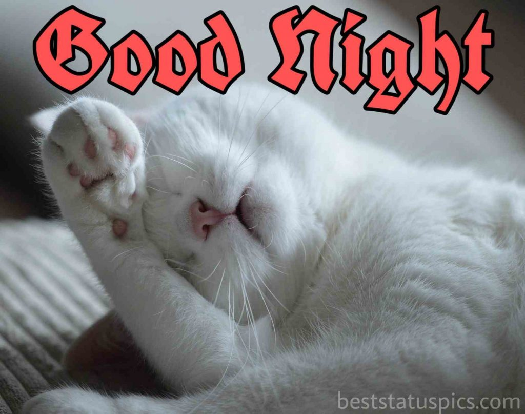 Beautiful good night cat pic