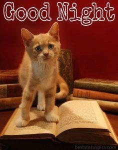 good night little kitten picture
