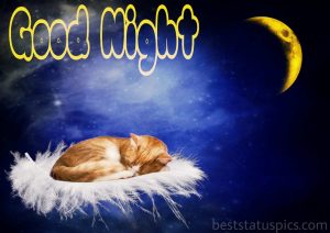 Cute cat image with good night
