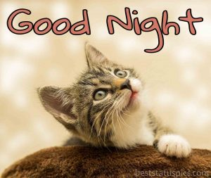 good night with kitten images