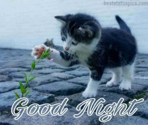 good night love cat with rose image