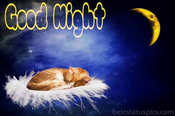 Good night cat images featured